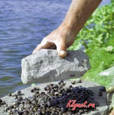 Ловля на ракушку » klyuet.ru-советы професиональных рыбаков