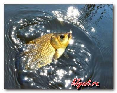 Как рыбалить в октябре