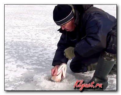 Как в феврале поймать налима, щуку, окуня или ерша