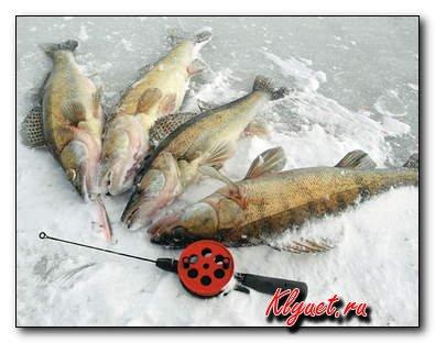 Какая рыбалка на исходе февраля